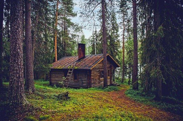 srub v lese